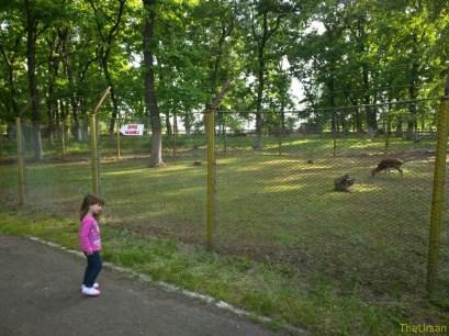 Sara la Zoo Braila Romania 32