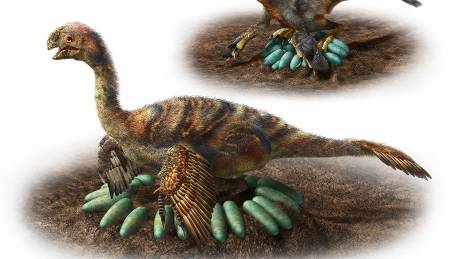 Giant oviraptosaur
