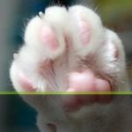 「iPhone 5s」の指紋認証機能「Touch ID」は猫の肉球も識別可能