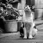 モノクロ写真をアップすると人工知能で白黒写真をカラーにしてくれるWebサービスを早稲田が開発