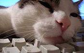 cat-on-keyboard