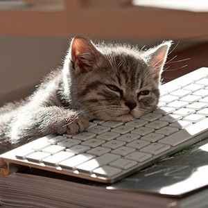 120519-cat-keyboard_thumb