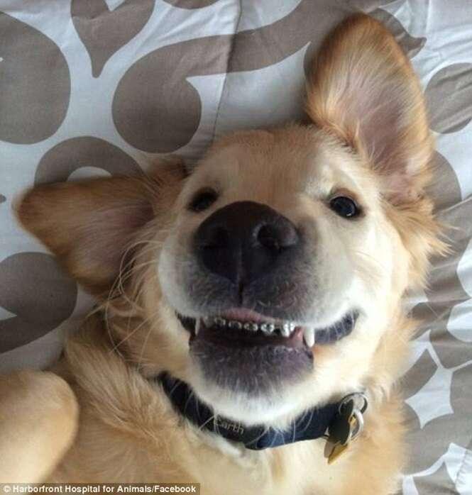 Cão usa aparelho ortodôntico fixo para corrigir problema dentário