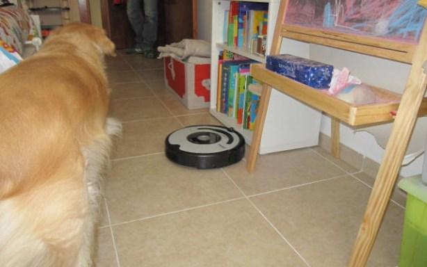 Al final tu mascota se acostumbra al Roomba.