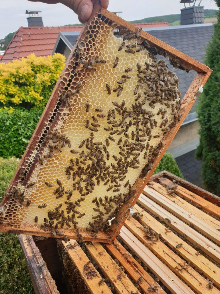 Le nostre api laboriose