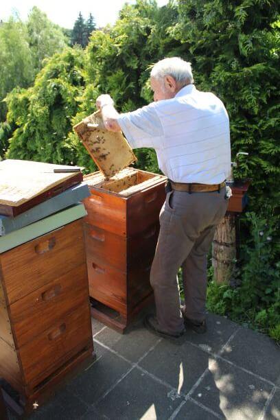 Nonno Heinz che ispeziona un'arnia