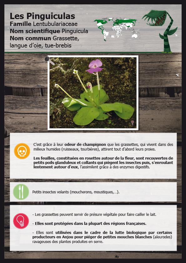 Signalétique plantes carnivores - Terra Botanica