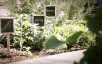 herb-garden-300x189