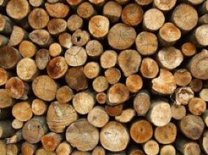 catasta-di-legna