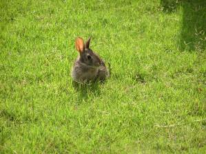 Crouching Bunny
