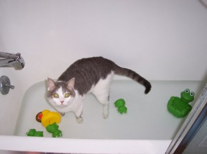 Izzy's Takes a Bath with Tubby Toys