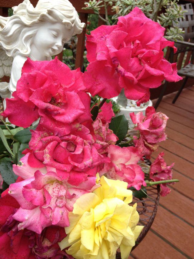 Rose Garden Spent Bloom Bouquet For You! Labor Dazzlin' Darlins!