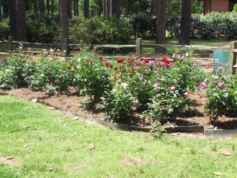Mary Johnston Rose Garden