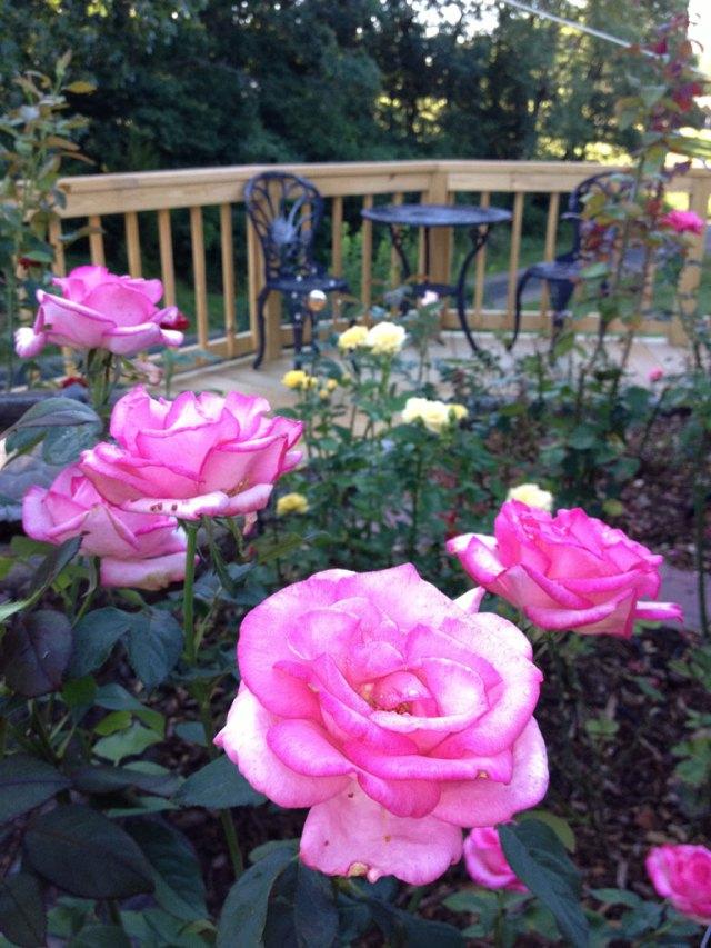 Summer Rose Garden Bistro