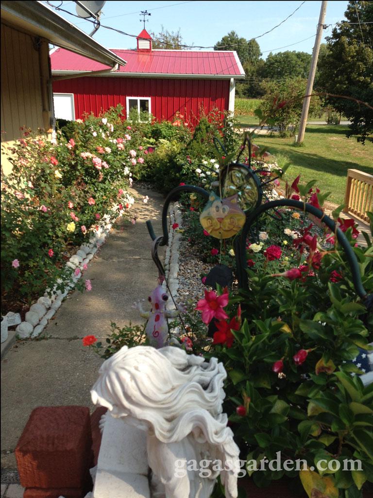 Rose Garden Surprise Visitors Gaga S Garden