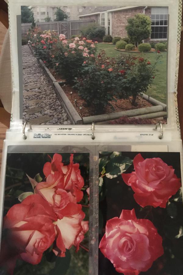 Texas Rose Garden | 'Brigadoon'