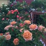 'Pumpkin Patch' Candelabras Light Dawn With An Orange Glow