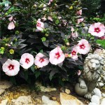 """The Desert Shall Bloom Like the Rose"""" Entryway to the Walk of Roses 