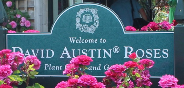 Welcome to David Austin Roses