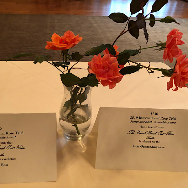 "George & Edith Vanderbilt Award 'Most Outstanding Rose' ""The Coral Knock®Out Rose bred by Will Radler"