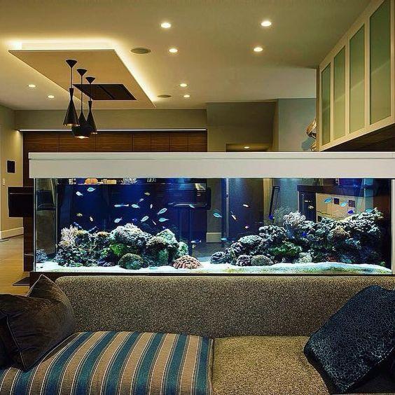 come dividere una stanza in due con acquario
