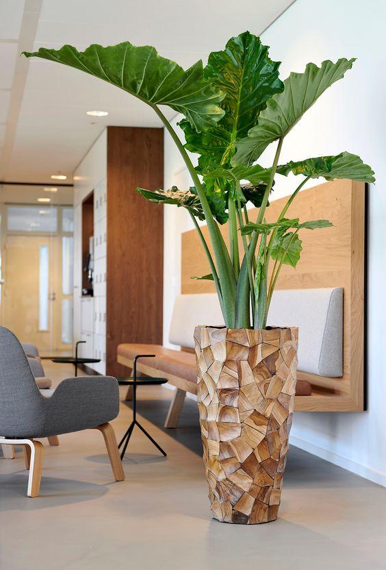 Include solo vasi, non mazzi di fiori vaso semplice e bello, perfetto per composizioni floreali fresche, rami. Arredare Con Le Piante 13 Specie Eleganti Da Appartamento