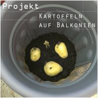 Projekt: #Kartoffelanbau auf dem Balkon
