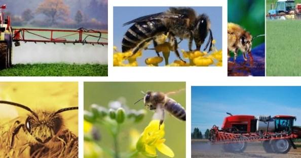 Bienen und Pestizide Neonicotide