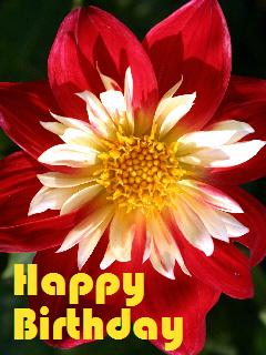 Happy Birthday E-Karte rot Dahlie