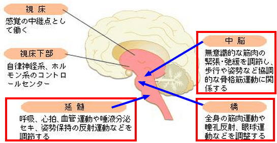 脊髄・筋肉系の原点