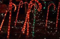 Christmas Lighting Traditions in Gainesville