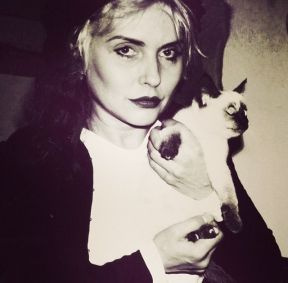 Debbie Harry Foto: yourcatwasdelicious.tumblr.com