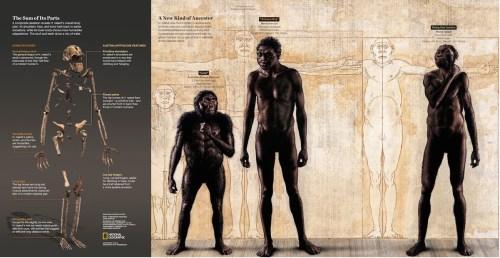 Homo Naledi: un cambio en el rumbo de la historia de la humanidad