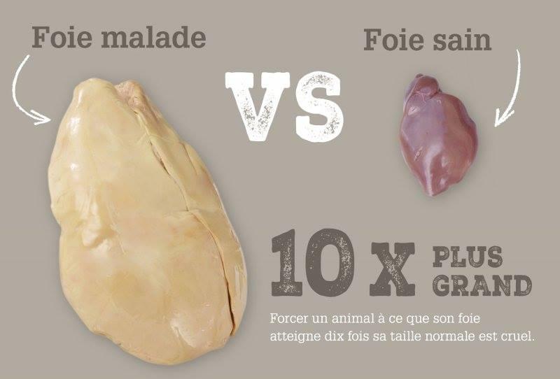 foie-gras-vs-foie-sain