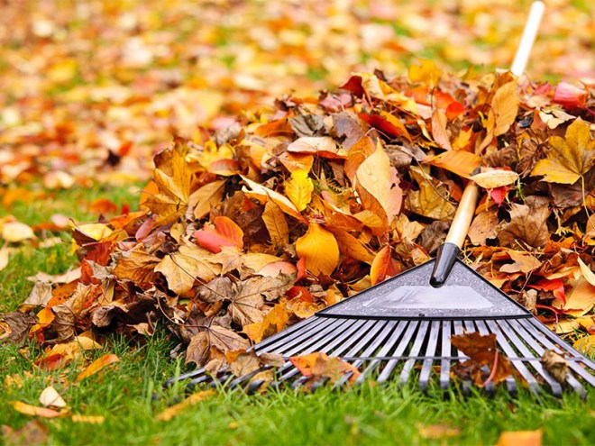 Fall Leaf Collection Services
