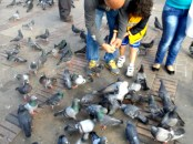 Palomas en manifestación contra destitución de Gustavo Petro
