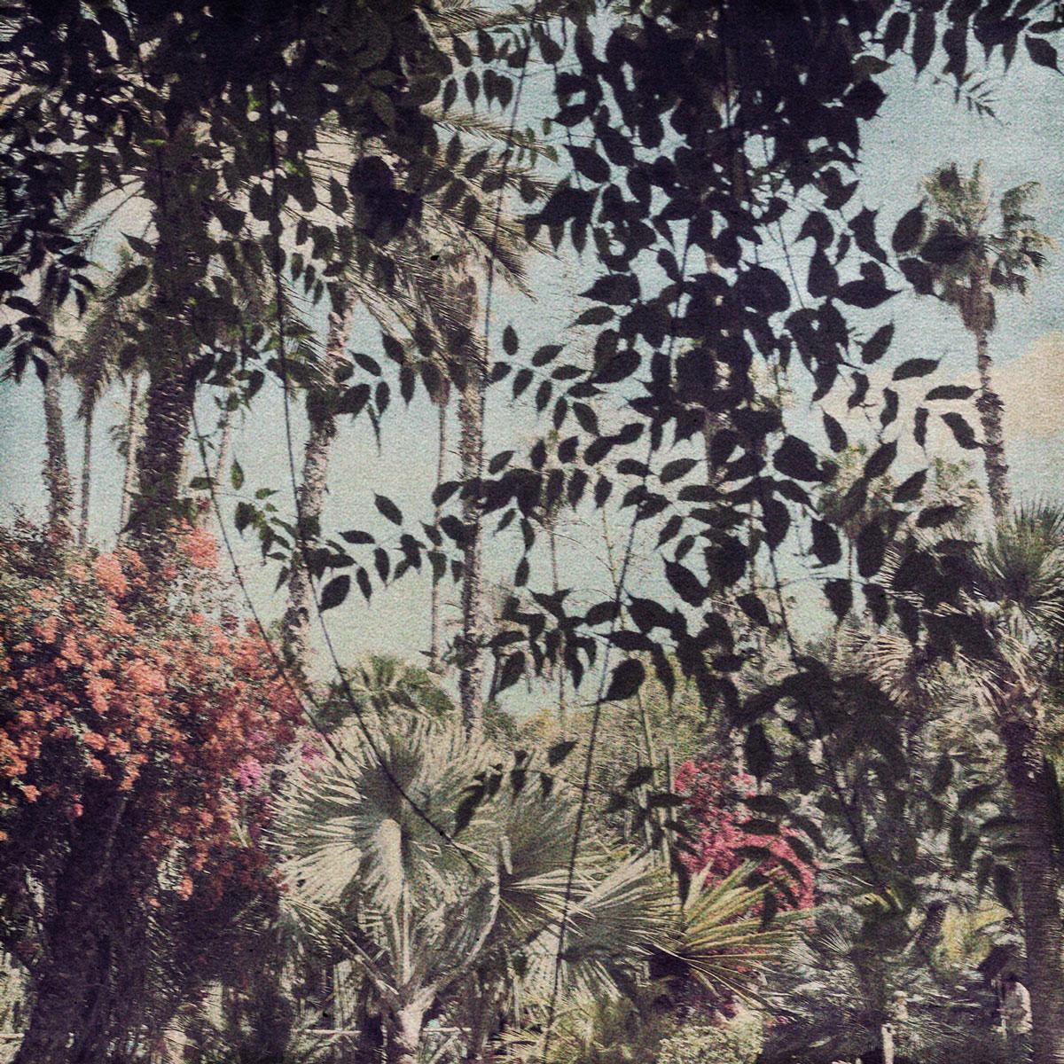 15,-Souvenir-du-Douanier-Rousseau,-FLORE