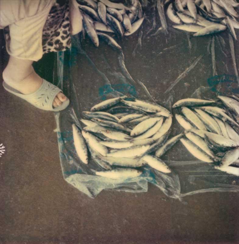 Casablanca #30, 2010 / Marché aux poissons
