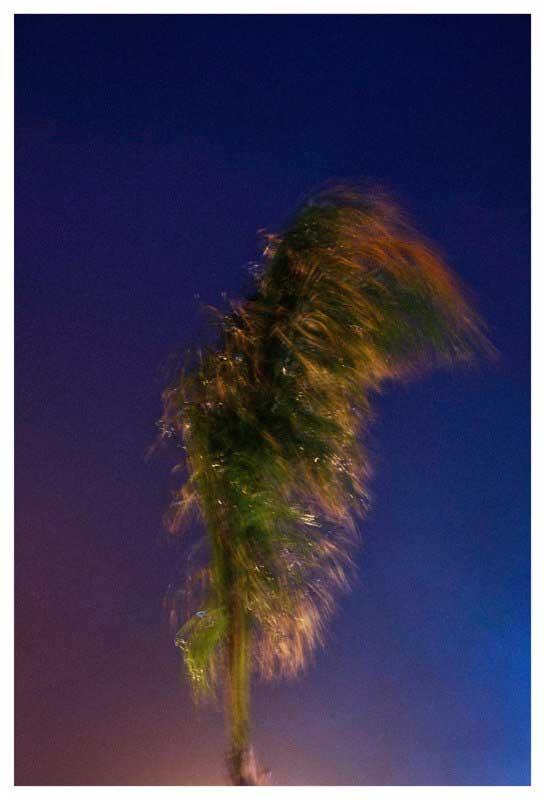 Palmier sous la pluie