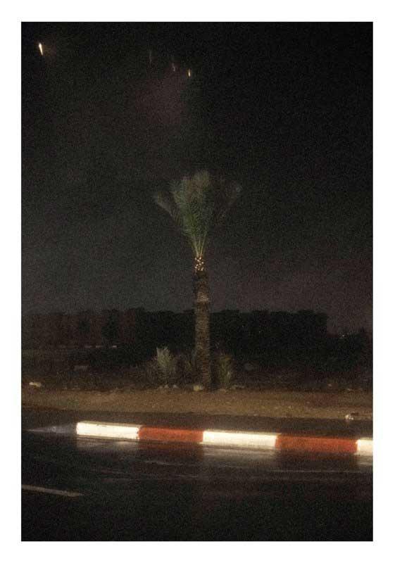 Palmier sous l'orage