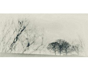 Arbres Etude, 2014. Impression papier coton, encres pigmentaires, 51 cm x 25,6 cm.