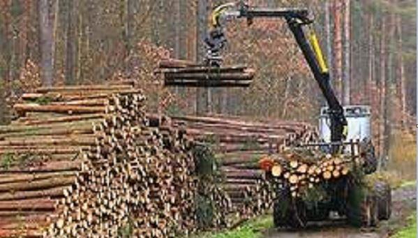 La Xunta concede 6 ayudas para el fomento de la silvicultura activa por más  de 142.000 euros para la comarca de Ferrolterra – Galicia Ártabra Digital