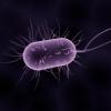 Contro le resistenze batteriche arriva il nano-antibiotico