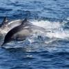 Così i sonar aumentano gli spiaggiamenti dei cetacei