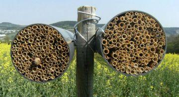 Casette per le api per salvare l'agricoltura