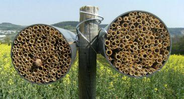 Risultato immagini per casette api