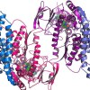 La straordinaria somiglianza tra proteine e cristalli