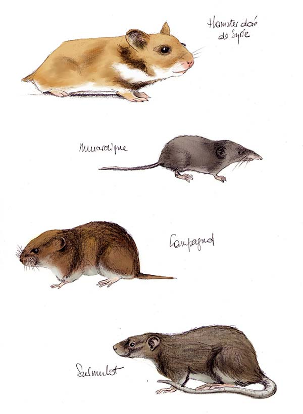 cousins grand hamster alsace