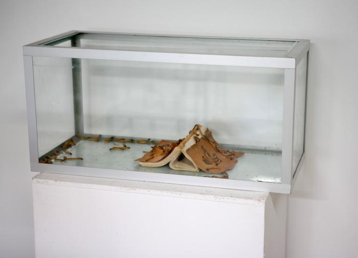 Adolfo Vera: Nimetön [dialogi] yksityiskohta, 2019, Akvaario, kirja ja jauhomatoja [Tenebrio Molitor] 34x70x31