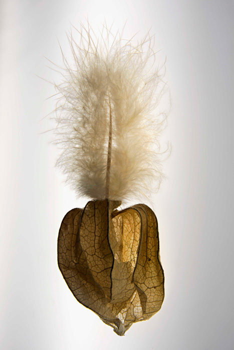 Ulla-Mari Lindström: Gallus x Physalis peruviana, 2020, Fotosec, koko 120 x 80 cm